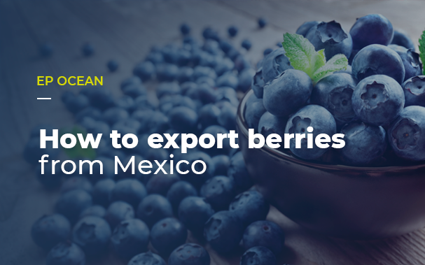 How to export berries from Mexico